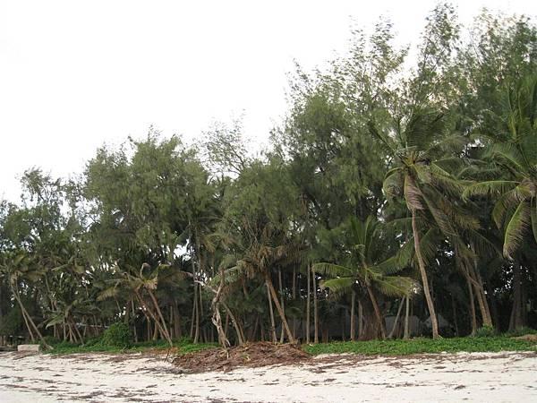 Diani Beach (12).jpg