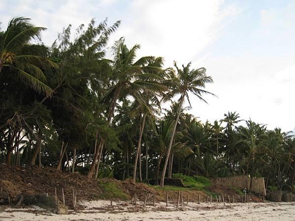 Diani Beach (16).jpg
