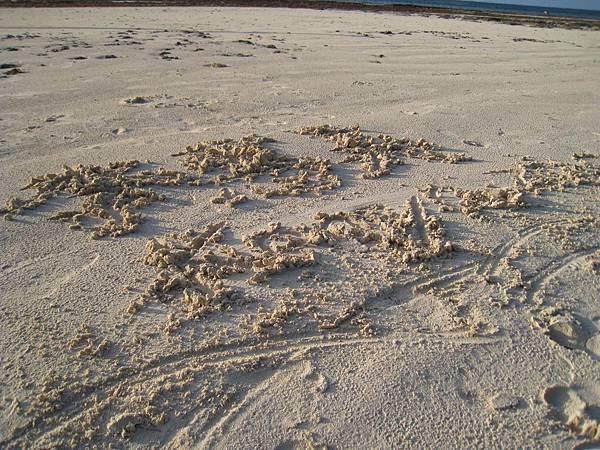 Diani Beach (24).jpg