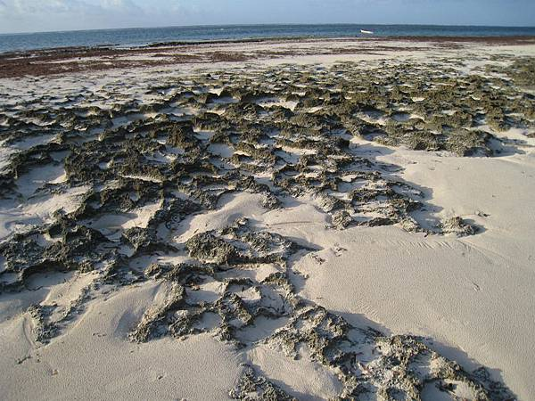 Diani Beach (28).jpg