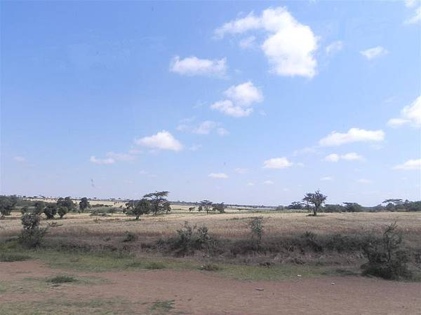 Acacia (1).JPG