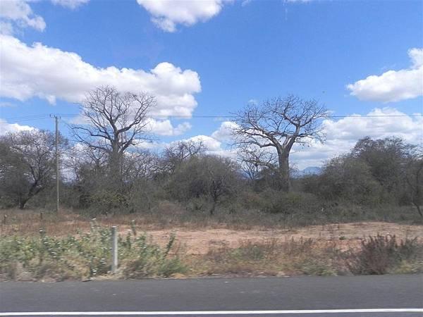 Baobab (1).JPG