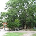 上賀茂神社 (15).JPG