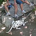 Plitvice Lakes NP 下湖區 (19).JPG