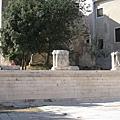 The Roman Forum (14).JPG