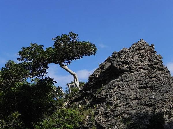 社頂自然公園 (12)
