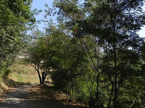 Tirana Botanical Garden (3).JPG