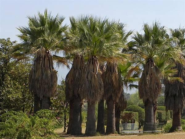 Tirana Botanical Garden (11).JPG