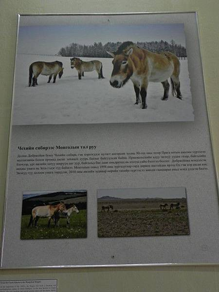 UB自然博物館 (44).JPG