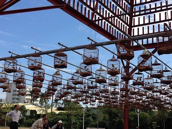 20131124 草屯植物公園小鳥唱歌比賽 (8).jpg