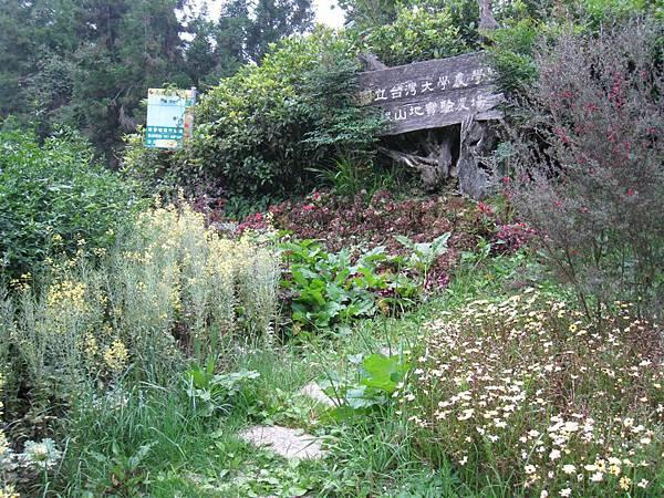 梅峰大門 (3).JPG
