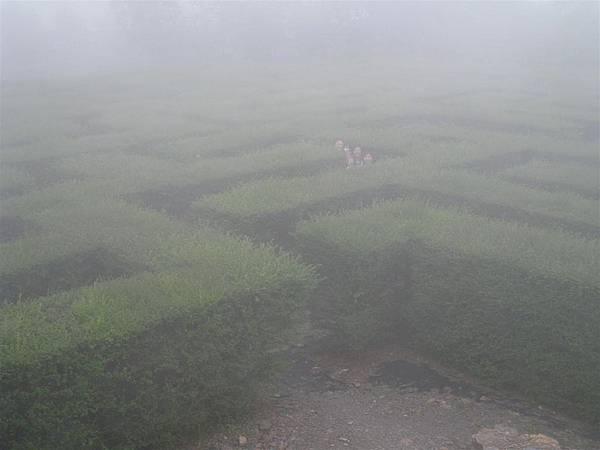 綠籬迷宮 (2).JPG