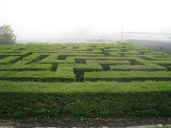 綠籬迷宮 (3).JPG