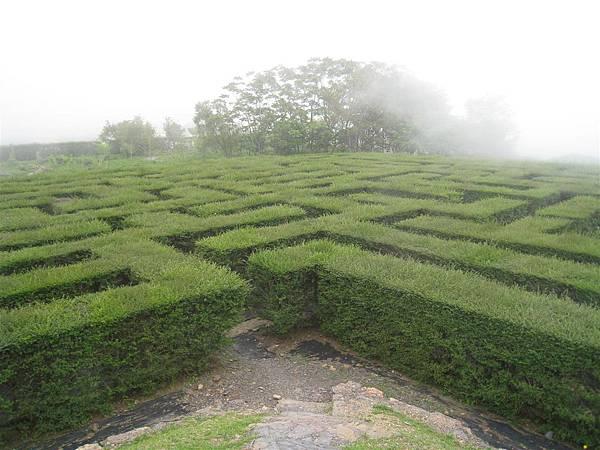 綠籬迷宮 (4).JPG