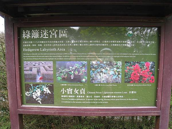 綠籬迷宮 (5).JPG
