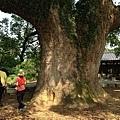 樟樹公巨木 (9).JPG