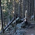 Tiki Trail and Skyline Gondola (13).JPG