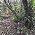 Bowen Bush Walk (11).JPG