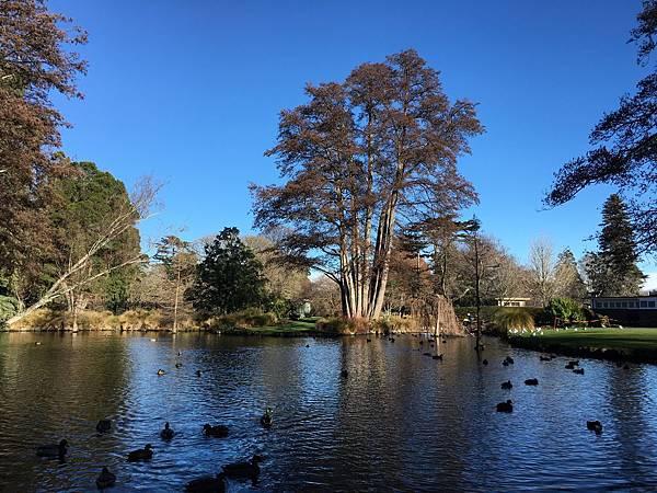 Christchurch Botanic Gardens (14).JPG