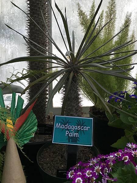 Christchurch Botanic Gardens (22).JPG