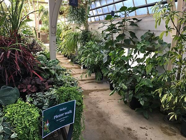 Christchurch Botanic Gardens (30).JPG