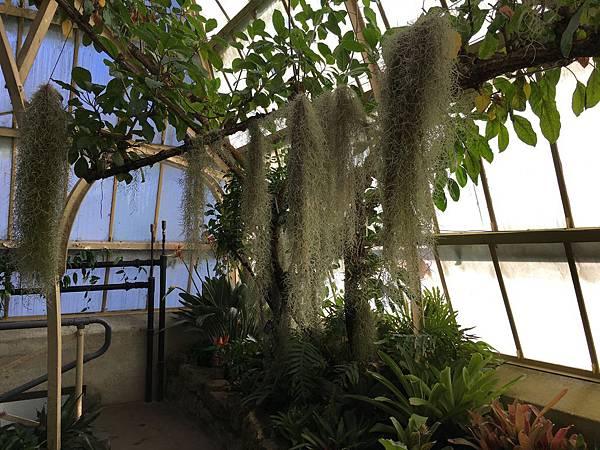 Christchurch Botanic Gardens (36).JPG