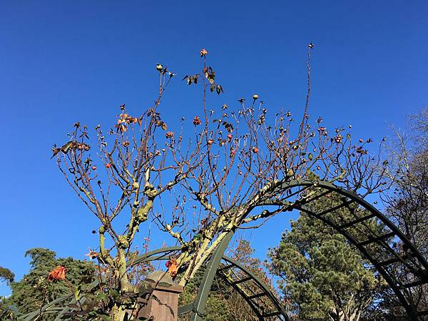Christchurch Botanic Gardens (41).JPG