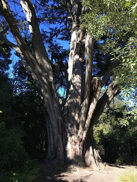 Christchurch Botanic Gardens (49).JPG