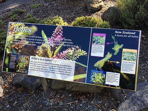 Christchurch Botanic Gardens (51).JPG
