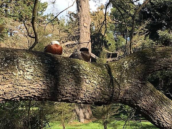 Christchurch Botanic Gardens (53).JPG