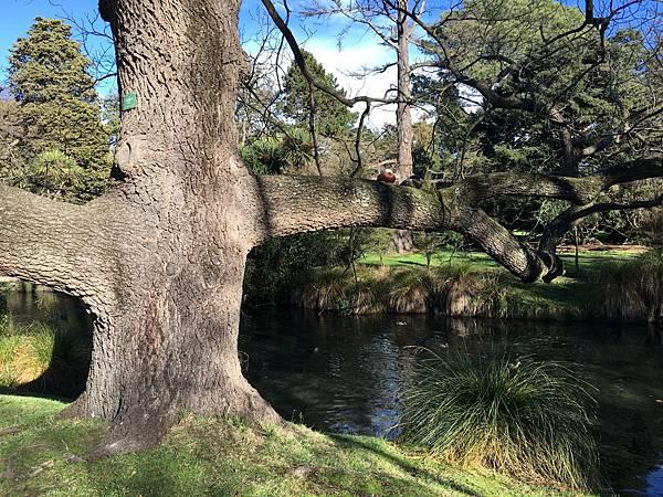 Christchurch Botanic Gardens (54).JPG