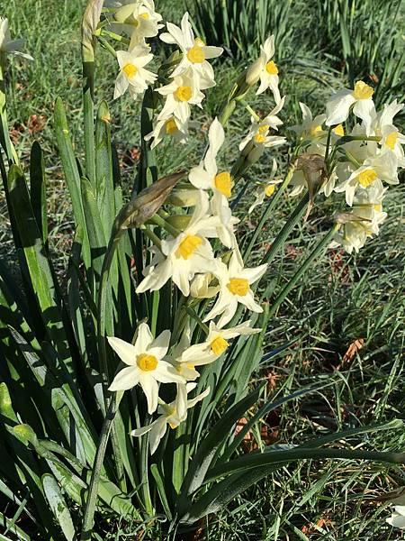 Christchurch Botanic Gardens (76).JPG