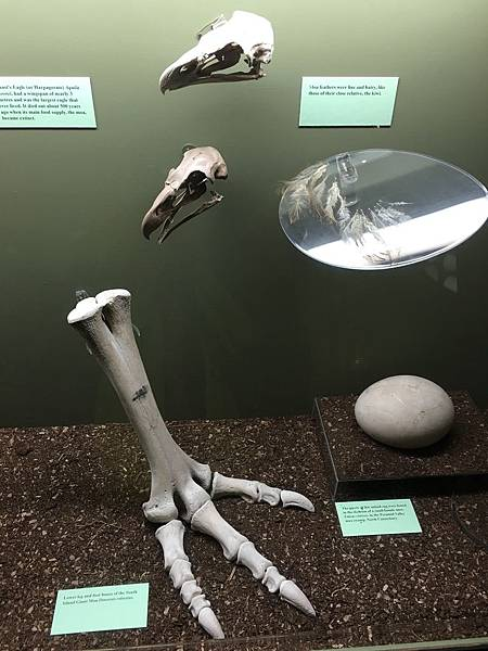 Canterbury Museum (2).JPG
