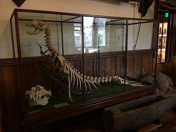 Canterbury Museum (21).JPG