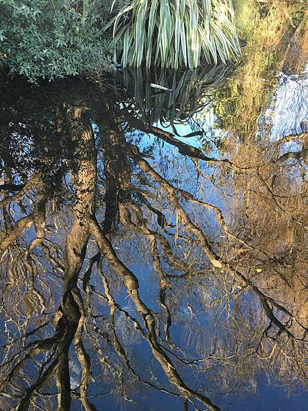 Willowbank Wildlife Reserve (10).JPG