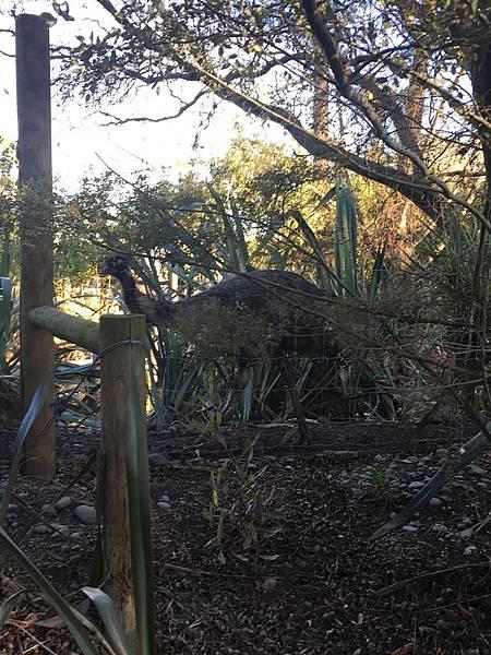 Willowbank Wildlife Reserve (14).JPG