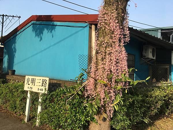 中興新村 天宮石斛 (3).JPG