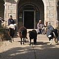 26303836:Egpyt 106 亞斯文(Aswan)象島的亞斯文博物館(Aswan Museum, Aswan Antiquities Museum)