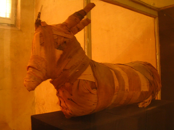 Aswan Museum (12).jpg