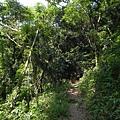 南洋熱帶母樹林 (5).jpg