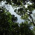 南洋熱帶母樹林 (6).jpg