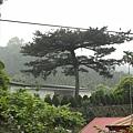 桂林村 (41).jpg
