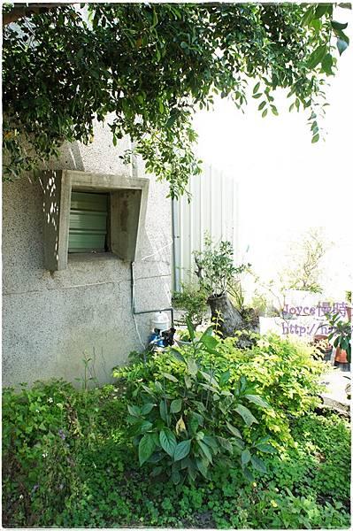 20130325馬藍葉染布 (3).JPG