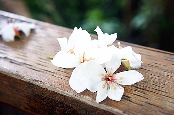 西湖渡假村20110513 (9).JPG