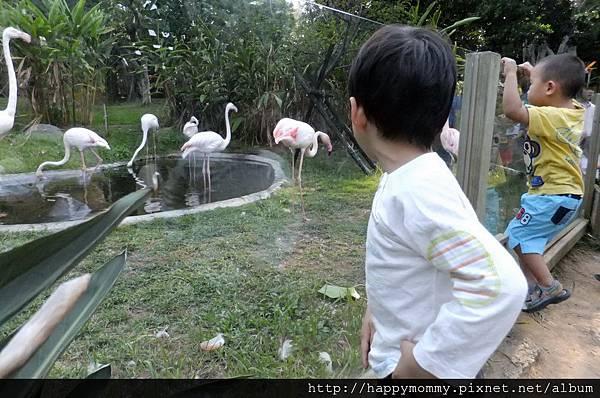 2011.10.08 新竹動物園 (8).JPG