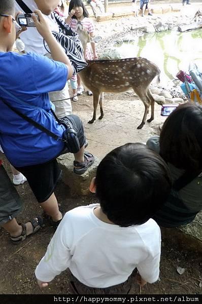 2011.10.08 新竹動物園 (20).JPG