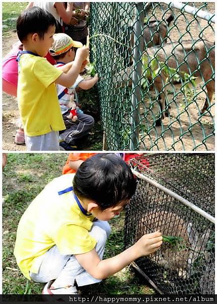 2011.11.05 學校 親子郊遊 活力農場 (17).jpg