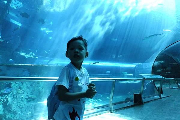 2012.05.01 墾丁之旅 海洋生物博物館 (10)