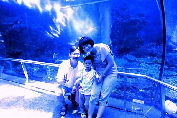 2012.05.01 墾丁之旅 海洋生物博物館 (14)
