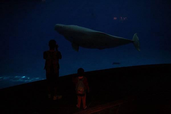 2012.05.01 墾丁之旅 海洋生物博物館 (20)